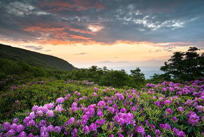 Appalachian Trail flowers