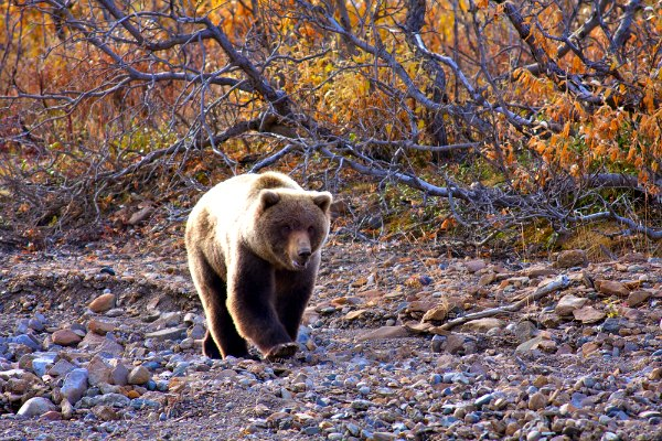 Spot Wildlife in Denali National Park