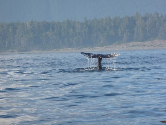 whale-tail-jo-canada