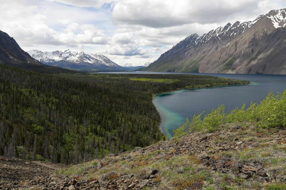Kluane National Park, Cottonwood Trail